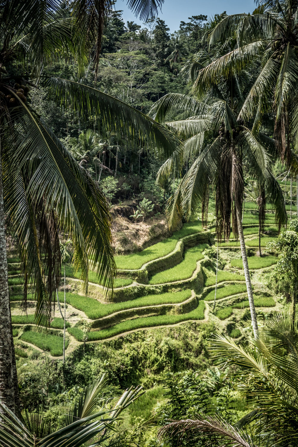 Tegallalang Bali Tour Package